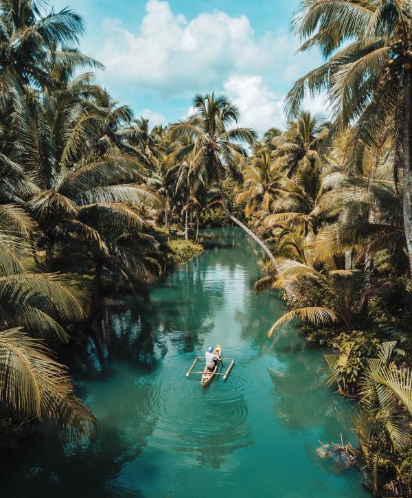 paysage-palmier-riviere-alizee-brimont